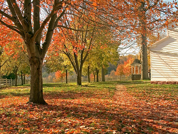 A view of a beautiful fall day with colorful leaves stock photo