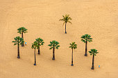 View of a beautiful Sandy Beach and Palm Tree in Canary Island Close up,Tenerife,Spain,Nikon D850