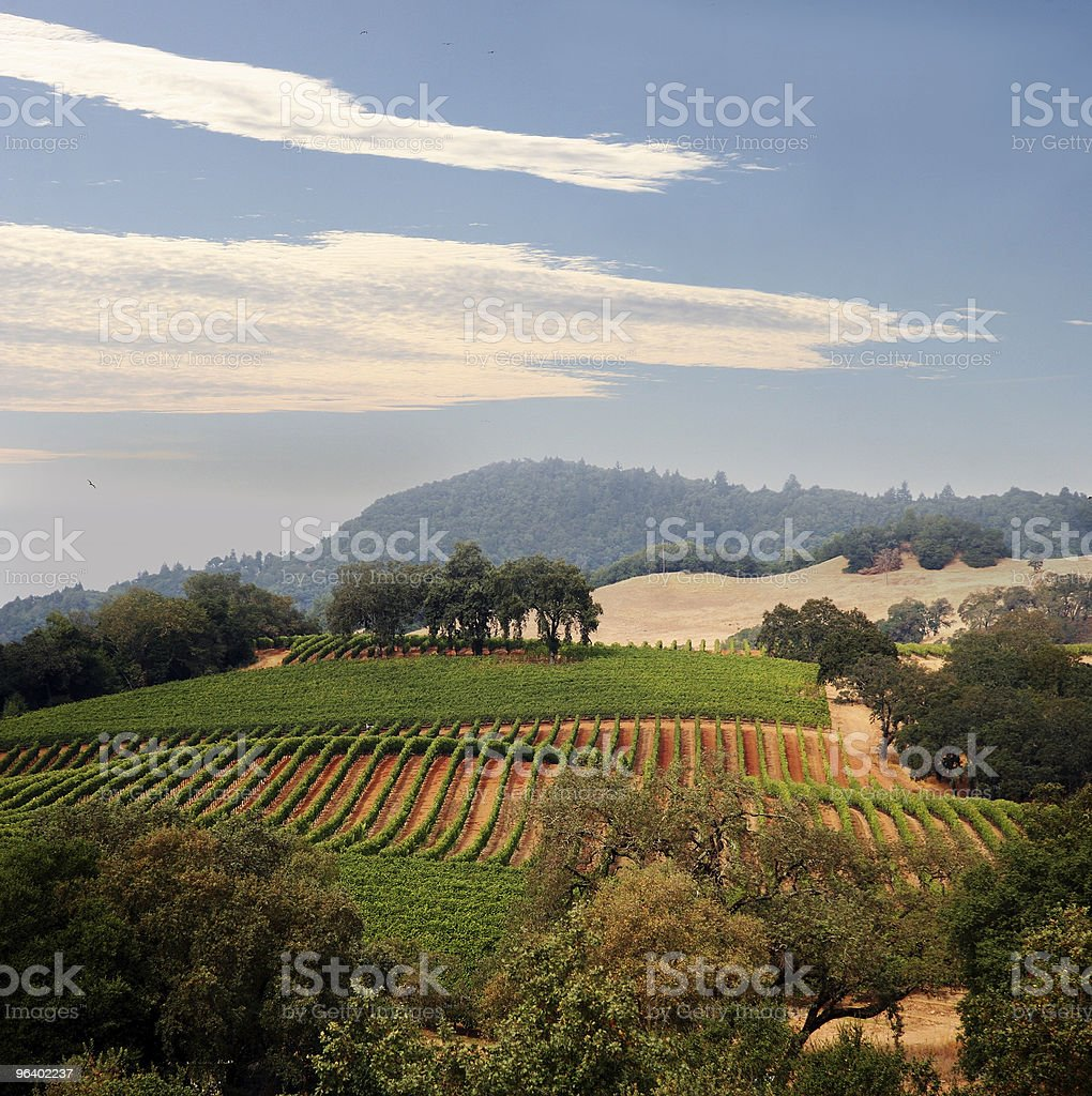 View of a California vineyard stock photo