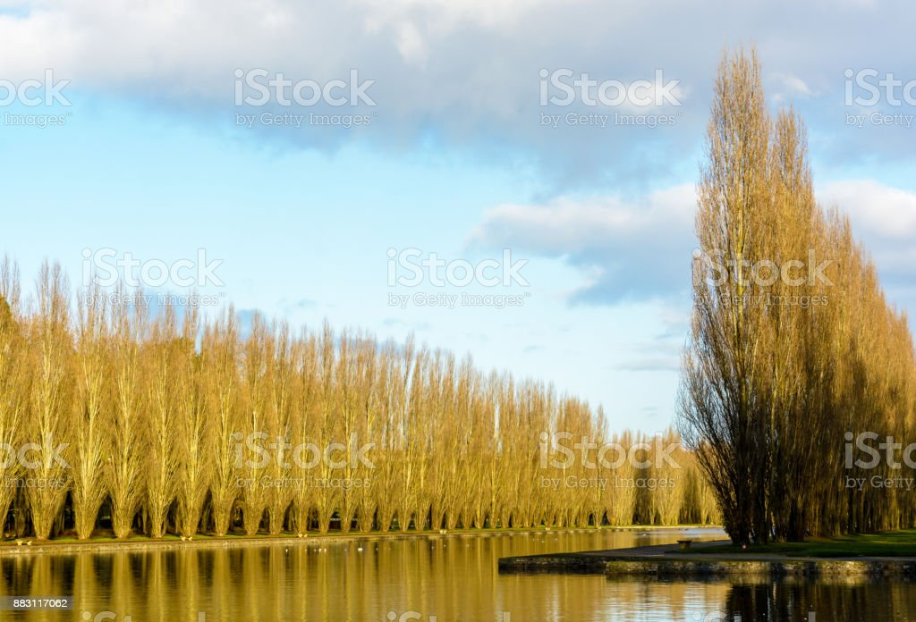 View of a canal bordered by poplar trees in a french public park by a sunny morning in autumn stock photo