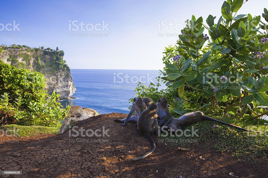 view of a cliff in Bali Indonesia stock photo