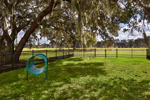 View of a Fenced in Dog Park with Dog Acrobatic Equipment and a Large Tree