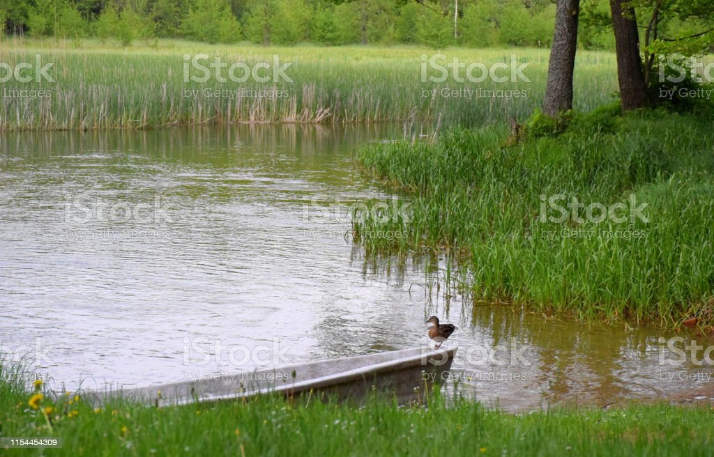 A view of a grass covered beach or coast with a vast yet shallow...
