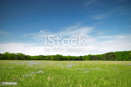 istock View of a green meadow with blue flowers on a sunny day 173936056