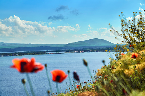 View of a lake in mountains with poppy flowers in foreground