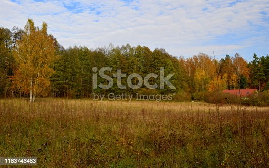 A view of a meadow, field, or pastureland covered entirely with grass, herbs, shrubs, and other greenery located next to a colorful autumn forest or moor with a small hut or shack in the distance