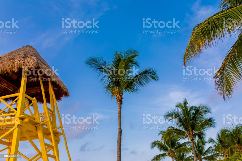 View of a palm tree and a wooden lifeguard tower or station towers against a vibrant tropical summer blue sky in a resort in Mexico in the carribean stock photo