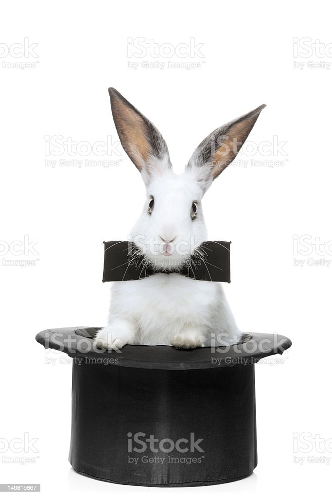 View of a rabbit with bow tie stock photo