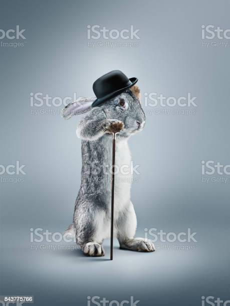 View of a rabbit with in a hat on gray background picture id843775766?b=1&k=6&m=843775766&s=612x612&h=cq6t10bfyd7zli4dxvxnkcq4 r7bo5erd3b7nziumoe=
