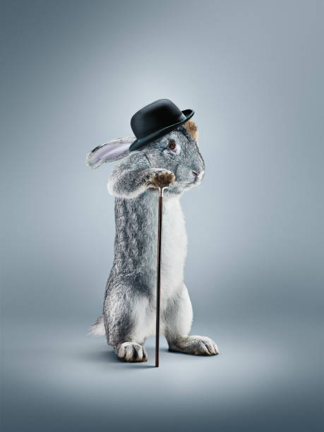 A view of a rabbit with in a hat on gray background stock photo