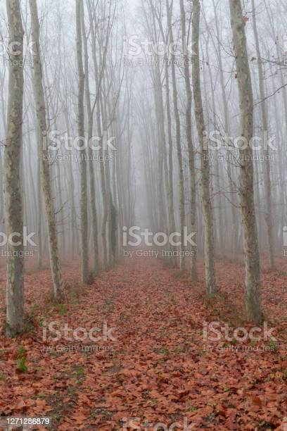 Photo of View of a road with dry fallen leaves around trees under a thick fog