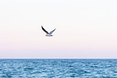 View of a seagull flying over the Mediterranean sea on the coast of Barcelona