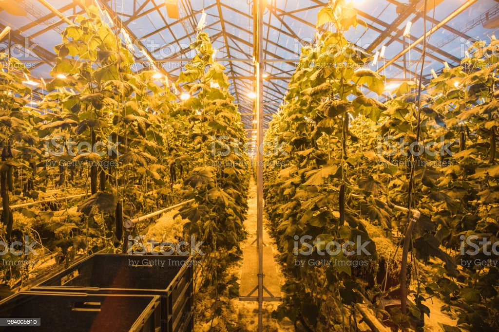 View of a shining greenhouse from side, geothermal heated - Royalty-free Agriculture Stock Photo