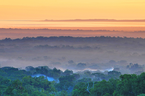 istock View of a sunrise above the Peten jungle with the pyramids of Tikal towering above the tree canopy in Guatemala. 1051224576