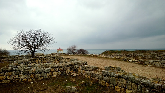 View of a tree and stone wall in Hersonissos Tauride in Crimea