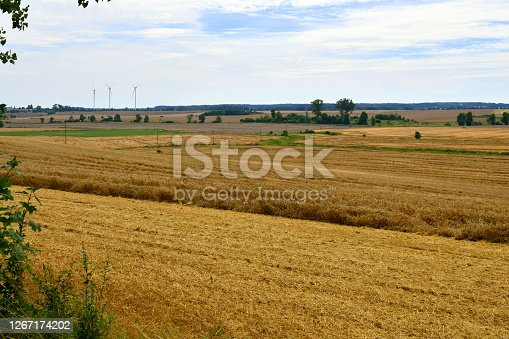 View of a vast field or pastureland overgrown with crops to be harvested with some trees and wind turbines visible in the distance on a cloudy yet warm summer day on a Polish countryside