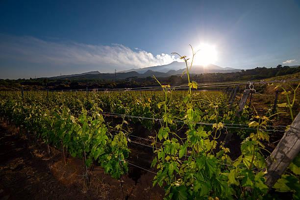 Blick auf ein Weingut in Vulkan Ätna im Hintergrund – Foto
