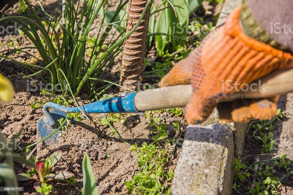 view of a woman's hand hoeing weeds in the garden - foto de acervo