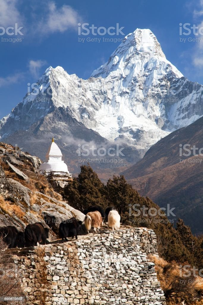 View of Ama Dablam with stupa and caravan of yaks stock photo
