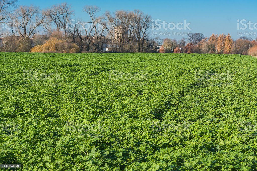 View of an Agra field in winter. stock photo