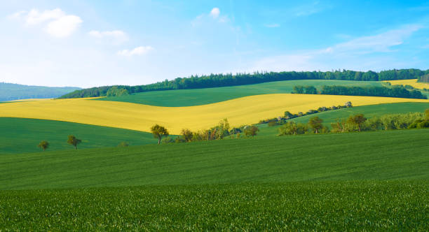 View of an agricultural landscape with a rape field and a wheat field, with a forest in the background under cloudy blue sky - South Moravia in the Czech Republic View of an agricultural landscape with a rape field and a wheat field, with a forest in the background under cloudy blue sky - South Moravia in the Czech Republic moravia stock pictures, royalty-free photos & images