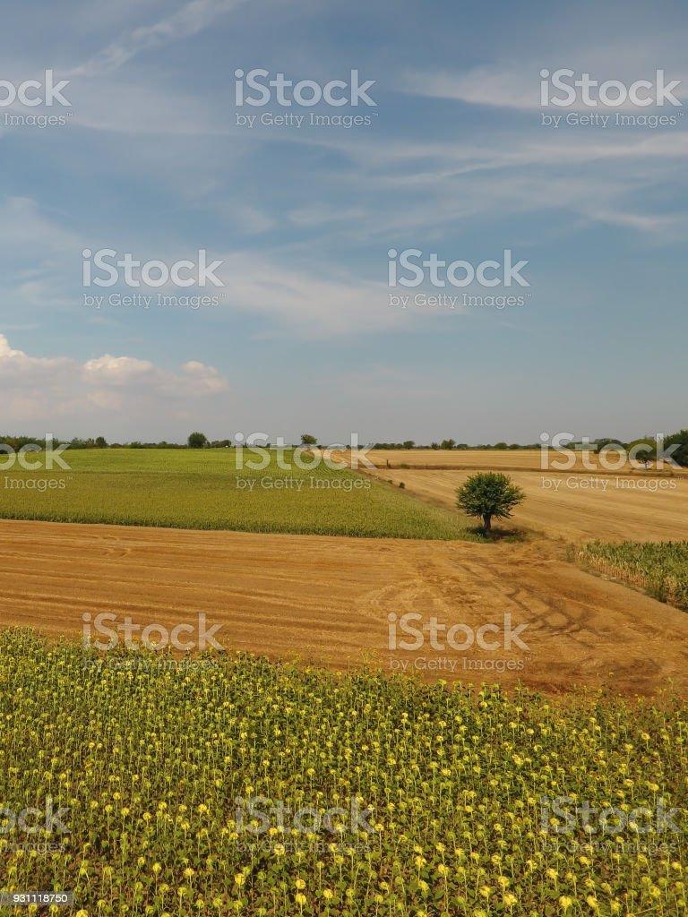 Bir İtalyan kırsal manzara görünümünü. - Royalty-free Avrupa Stok görsel