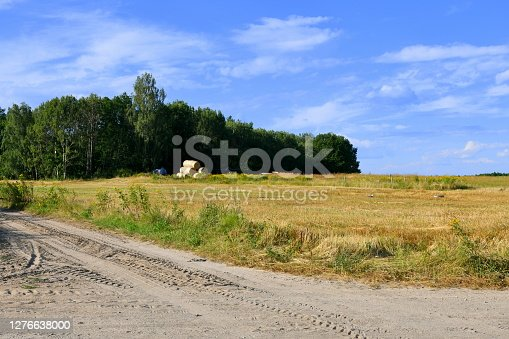A view of an old dirt road or path leading to a dense forest or moor and beyond with a vast field, meadow or pastureland visible to the right seen on a Polish countryside on a summer day
