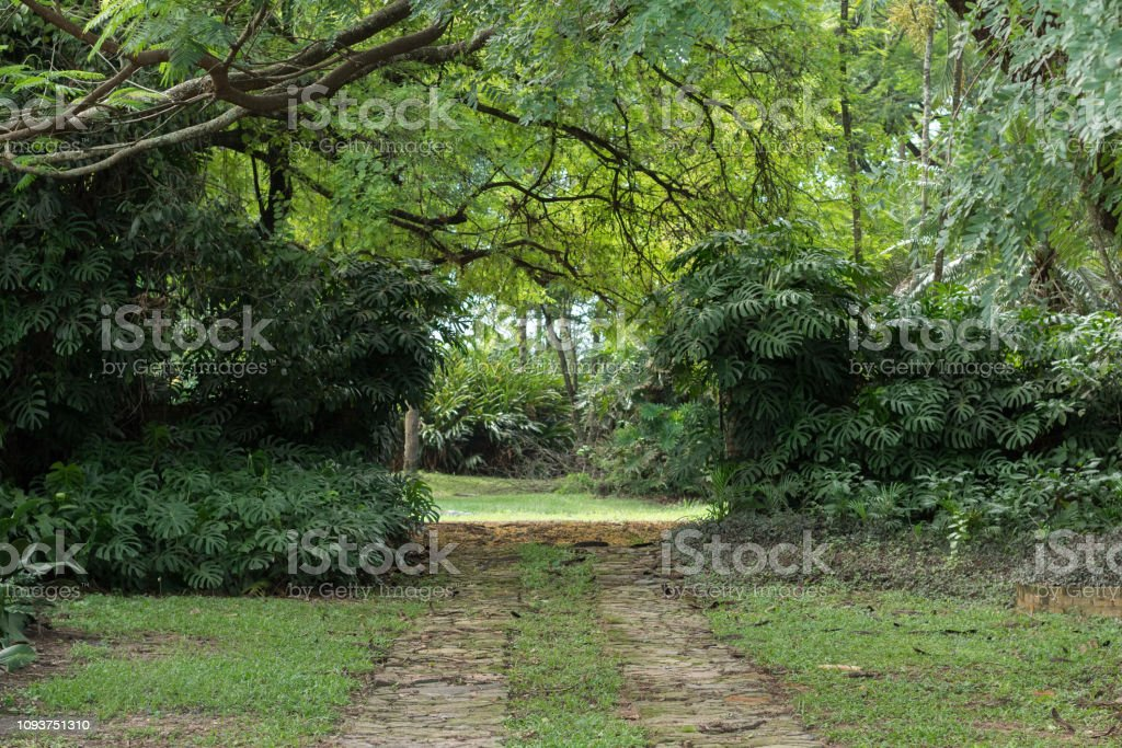 View of an open gate with windowleaf  / Swiss cheese plant (Monstera deliciosa ) on both side of it and beautiful trees