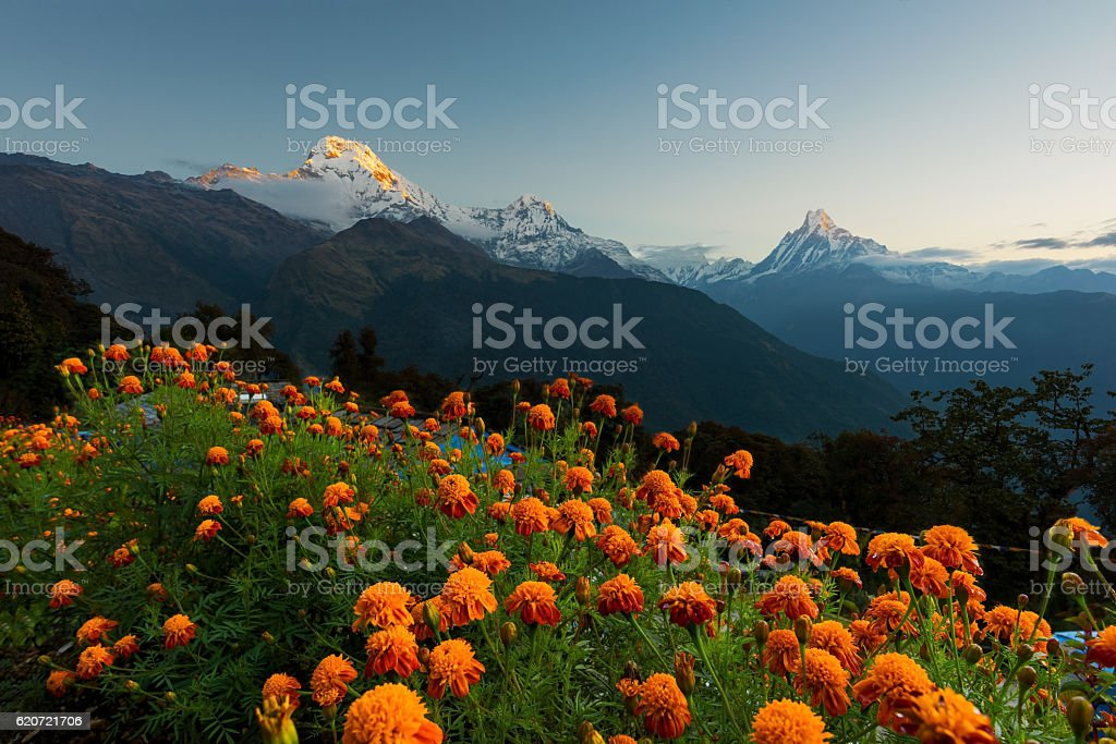 View of Annapurna and Machapuchare peak at Sunrise from Tadapani stock photo