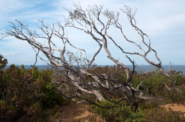 Naked tree top au naturale stock photo. Image of tree