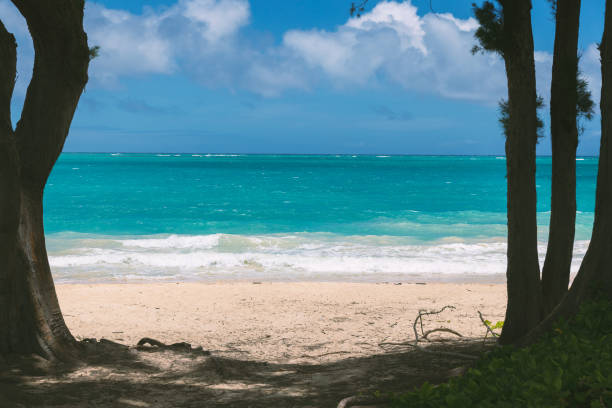 View of beatiful beach with turquoise water between two trees in Waimanalo stock photo