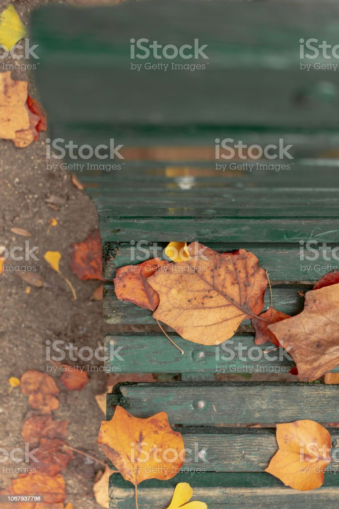 View of Bench with Leaves from the Top - foto stock