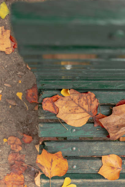 view of bench with leaves from the top - monica pirozzi foto e immagini stock