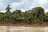 Eco tourism boat tour on Beni river, view on muddy river water and green rainforest at Madidi national park, Amazon river basin in Bolivia, South America