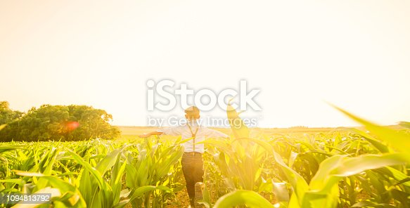 Rear view of boy playing on corn field on sunny day