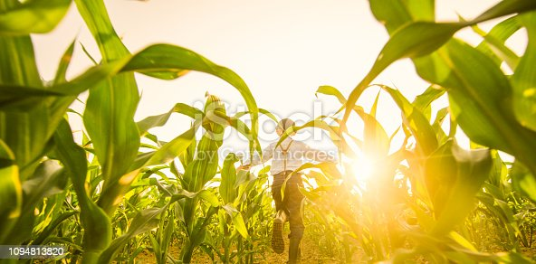 1094815168 istock photo View of boy playing on corn field 1094813820