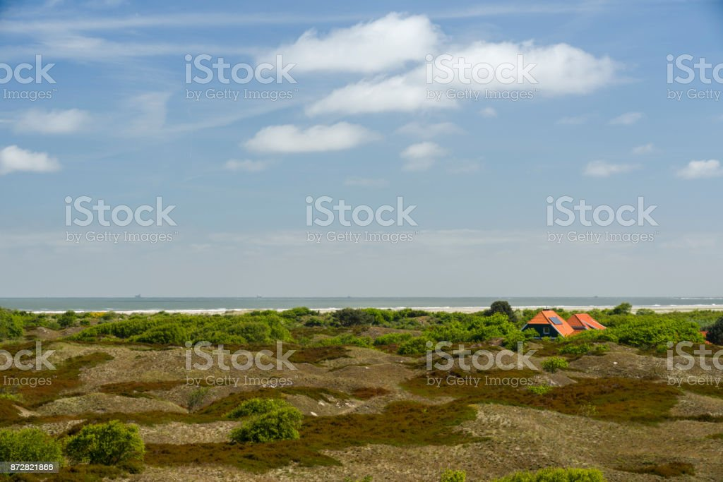View of brown dunes with heath and trees stock photo