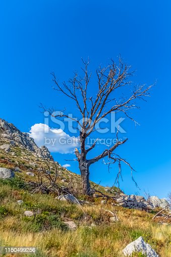 View of burned tree and broken, result of the fires, at the top of Caramulo mountains, in Portugal