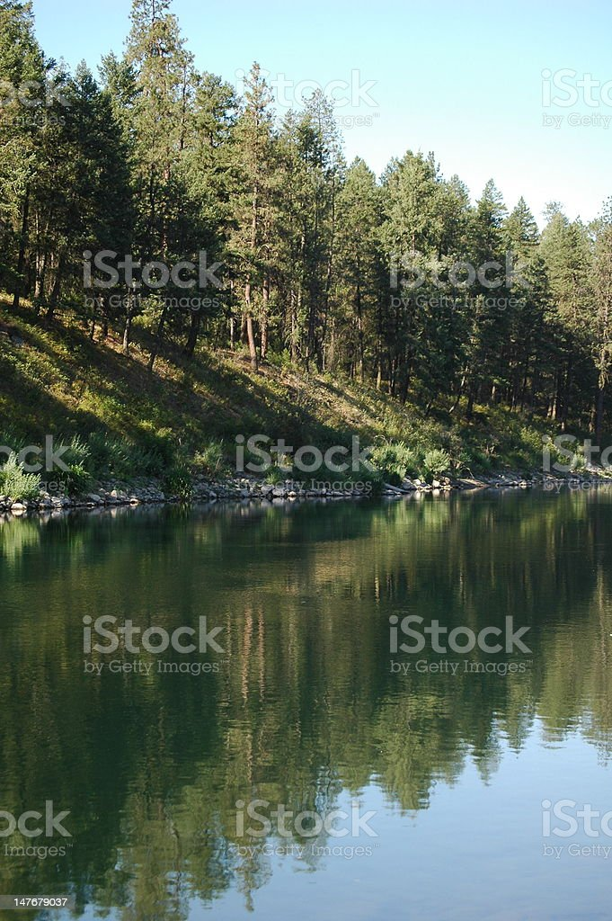 View of Calm River and Pine Trees stock photo