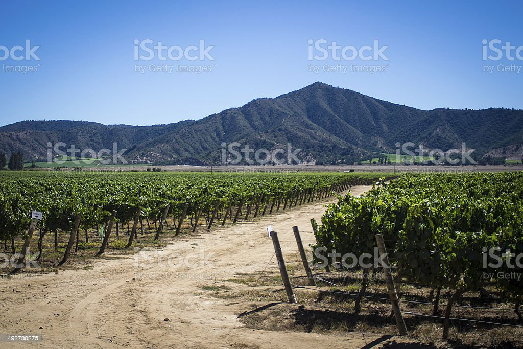 View of Casablanca wine vineyards Chile, South America stock photo