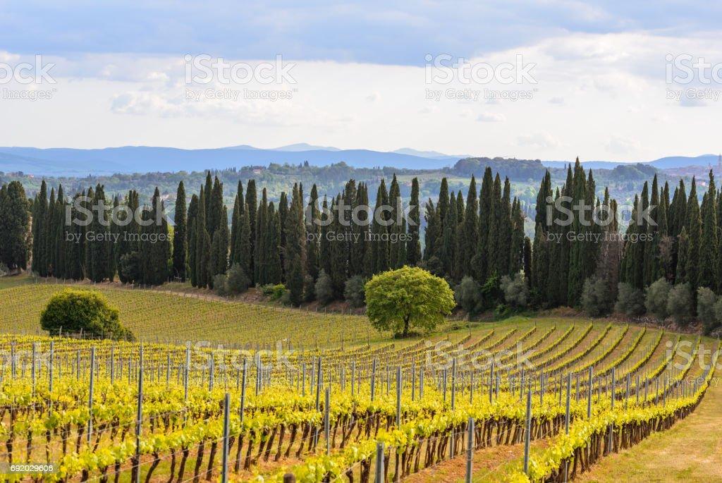 View of Chianti area near the town of Radda stock photo