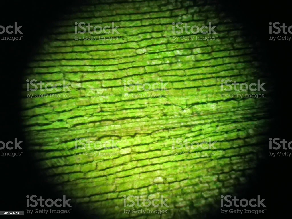 View of chloroplasts and cells under the microscope stock photo