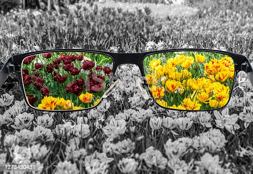 View of colorful tulips in glasses and monochrome background. Different world perception. Optimism, hopefulness, mental health concept.