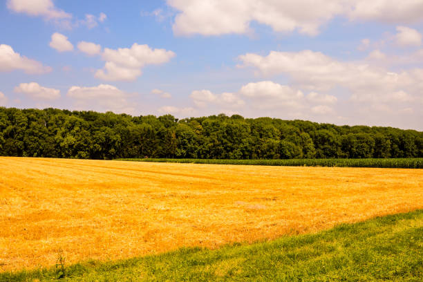 View of Cultivated Field in the countryside Photo Picture View of Cultivated Field in the countryside university of missouri columbia stock pictures, royalty-free photos & images