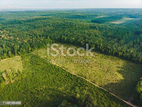view of deforestation in center of big forest. destruction