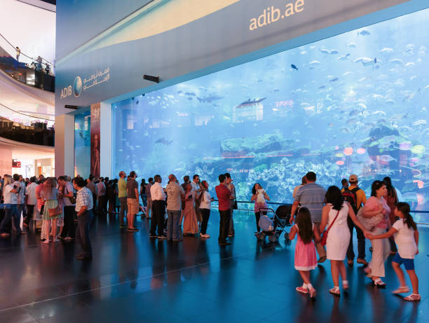 view of dubai aquarium inside dubai mall - animals in captivity stock pictures, royalty-free photos & images