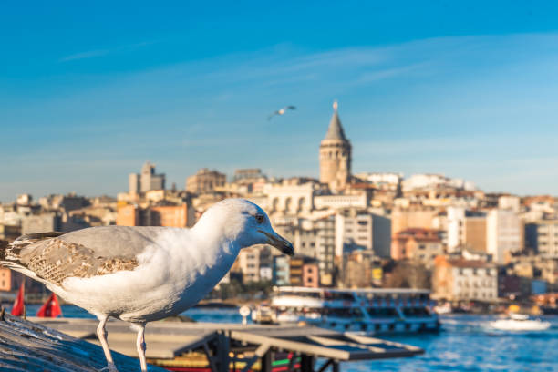 Cтоковое фото View of famous Galata tower with seagull in Istanbul