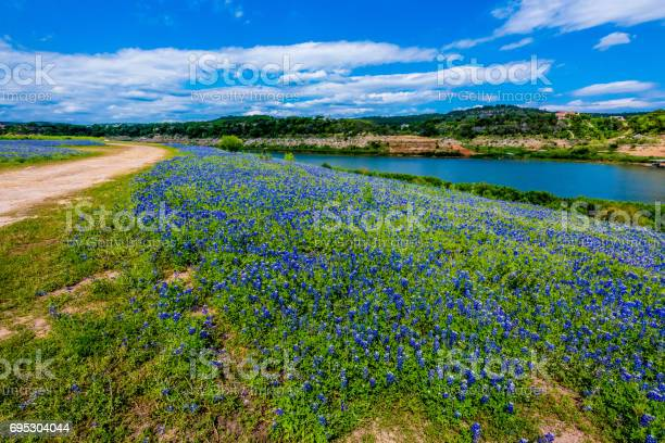 Photo of View of Famous Texas Bluebonnet  Wildflowers on the Colorado River in Texas.
