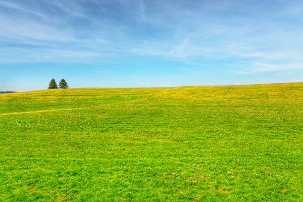 view of field at deutschland germany - meadow stock pictures, royalty-free photos & images