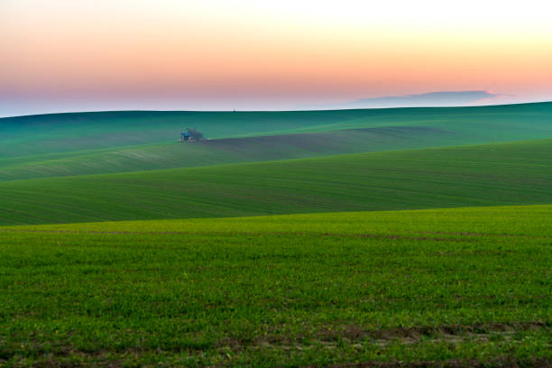 View of field, Moravia View of field on sunrise moravia stock pictures, royalty-free photos & images